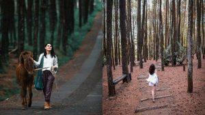 tempat outbound hutan pinus