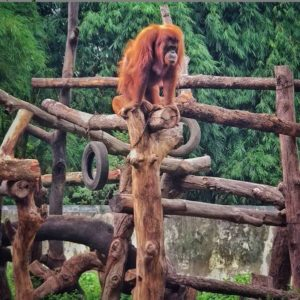 paket outbound gembira loka zoo